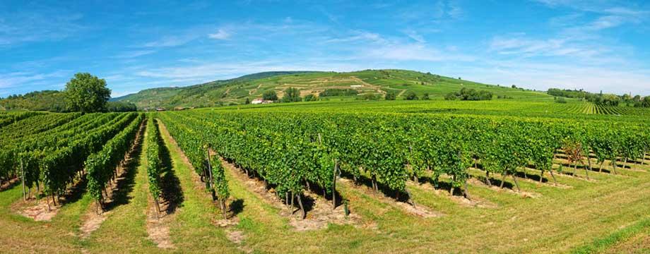 Le parcellaire des AOC viticoles disponible sur le Géoportail
