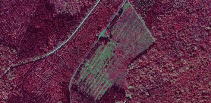 Mise en évidence de coupes forestières (en vert)