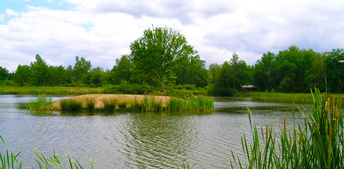 Mesure compensatoire : création d'îlot en complément de restauration de plan d'eau (image CEREMA)